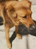 Honey en adopción