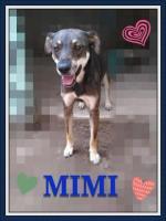 Mimi en adopción responsable